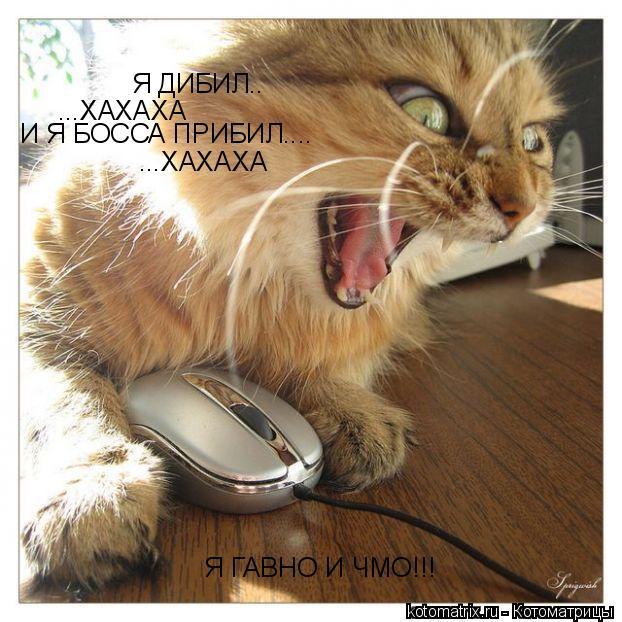 Котоматрица: Я ДИБИЛ.. ...ХАХАХА И Я БОССА ПРИБИЛ.... ...ХАХАХА Я ГАВНО И ЧМО!!!