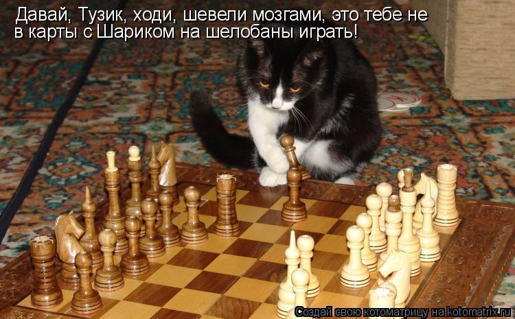 Котоматрица: Давай, Тузик, ходи, шевели мозгами, это тебе не  в карты с Шариком на шелобаны играть!