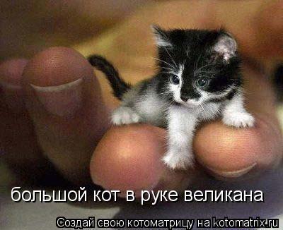 Котоматрица: большой кот в руке великана