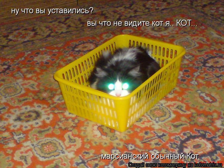 Котоматрица: ну что вы уставились? ну что вы уставились? вы что не видите кот я.. КОТ... вы что не видите кот я.. КОТ... марсианский обычный Кот