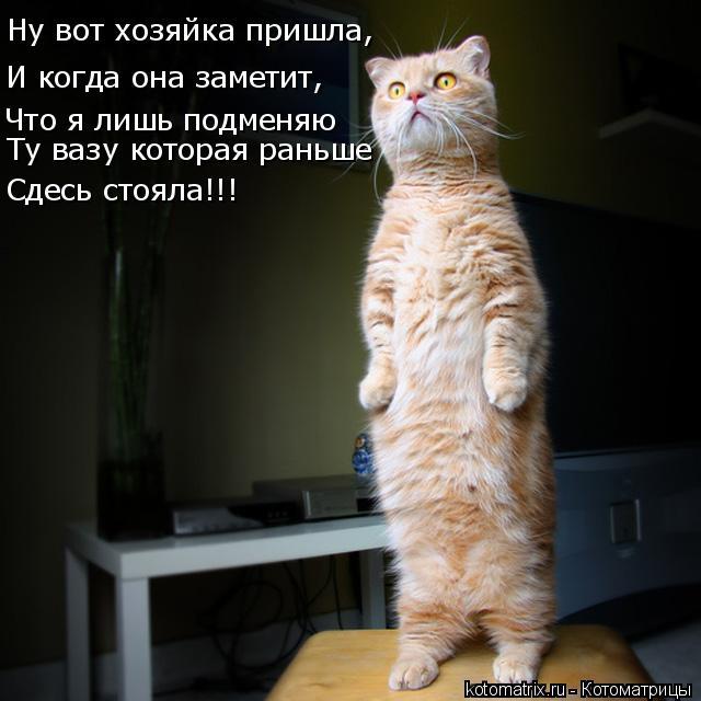 Котоматрица: Ну вот хозяйка пришла, И когда она заметит, Что я лишь подменяю Ту вазу которая раньше Сдесь стояла!!!