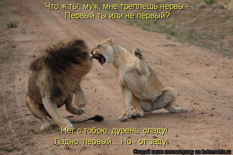 Котоматрица: Что ж ты, муж, мне треплешь нервы -  Первый ты или не первый? Нет с тобою, дурень, сладу!  Ладно, первый... Но - от заду!