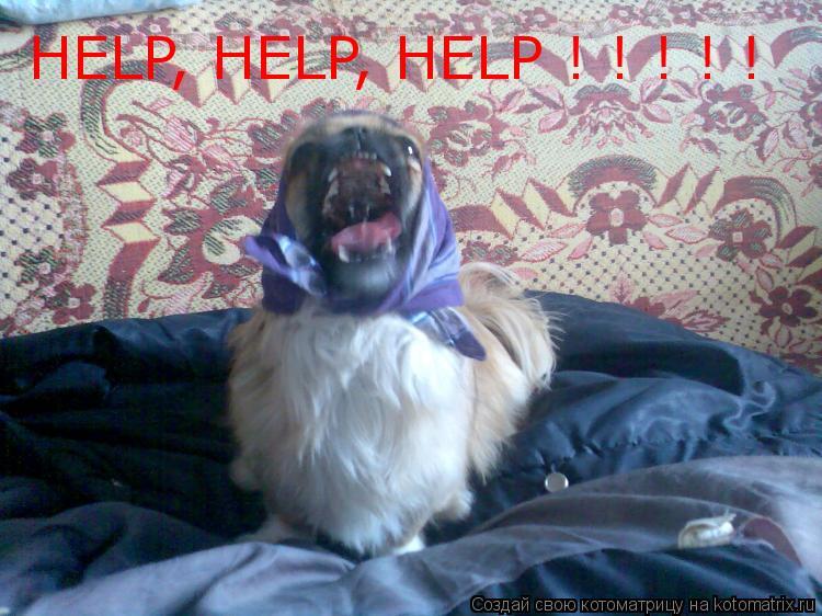 Котоматрица: HELP, HELP, HELP ! ! ! ! !