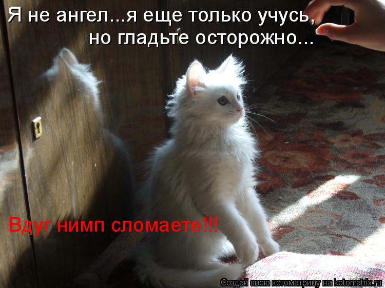 Котоматрица: Я не ангел...я еще только учусь, но гладьте осторожно... Вдуг нимп сломаете!!!