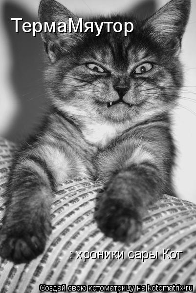 Котоматрица: ТермаМяутор : хроники сары Кот