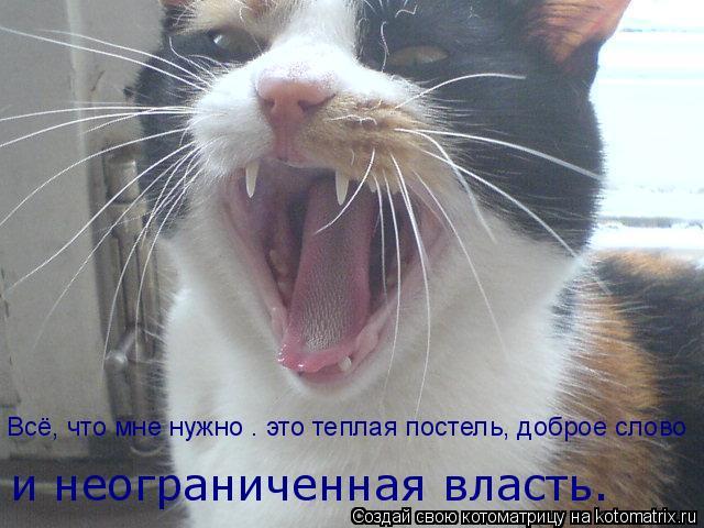 Котоматрица: Всё, что мне нужно — это теплая постель, доброе слово и неограниченная власть.