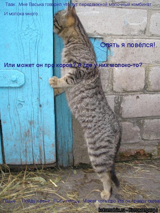 Котоматрица: Таак...Мне Васька говорил что тут передвижной молочный комбинат... И молока много... Опять я повёлся! Или может он про коров? А где у них молоко-