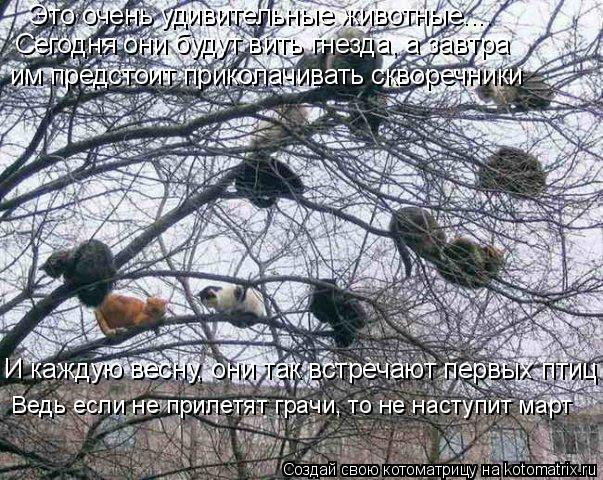 Котоматрица: Это очень удивительные животные.... Сегодня они будут вить гнезда, а завтра им предстоит приколачивать скворечники И каждую весну, они так в