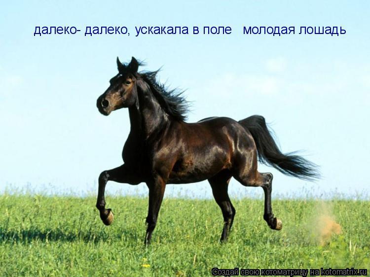 Котоматрица: далеко- далеко, ускакала в поле   молодая лошадь
