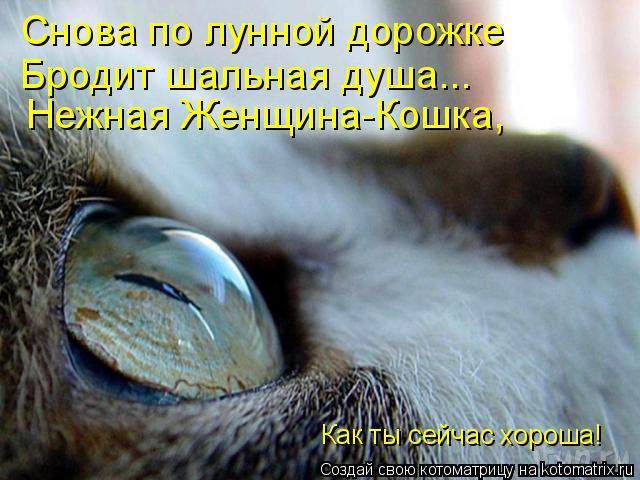 Котоматрица: Снова по лунной дорожке Бродит шальная душа... Нежная Женщина-Кошка, Как ты сейчас хороша!