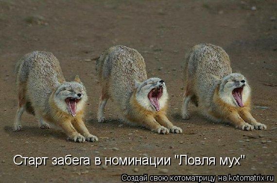"Котоматрица: Старт забега в номинации ""Ловля мух"""