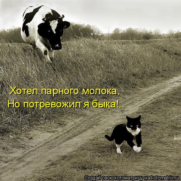 Котоматрица: Хотел парного молока, Но потревожил я быка!..