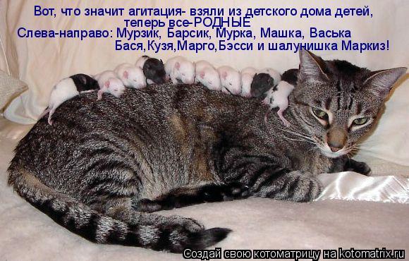 Котоматрица: Вот, что значит агитация- взяли из детского дома детей,  теперь все-РОДНЫЕ Слева-направо: Мурзик, Барсик, Мурка, Машка, Васька Бася,Кузя,Марго,