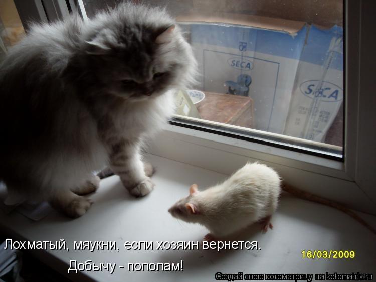 Котоматрица: Лохматый, мяукни, если хозяин вернется. Добычу - пополам!