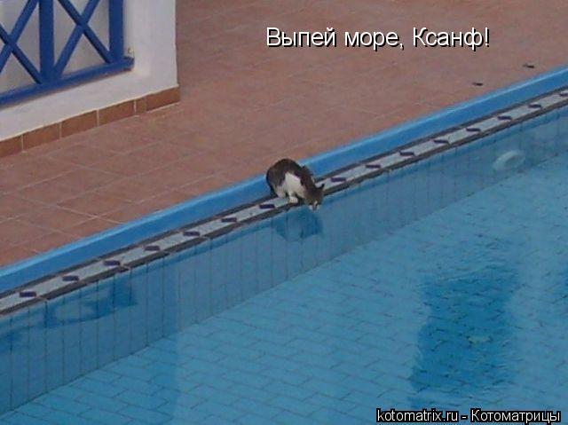 Котоматрица: Выпей море, Ксанф!