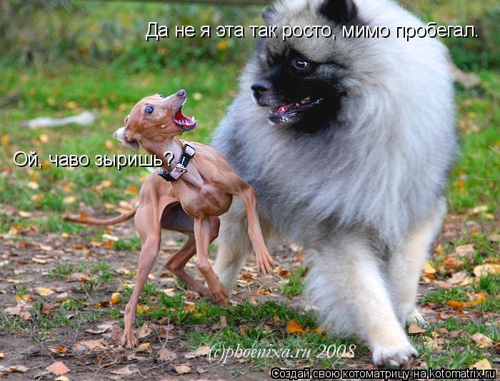 Котоматрица: Ой, чаво зыришь? Да не я эта так росто, мимо пробегал.