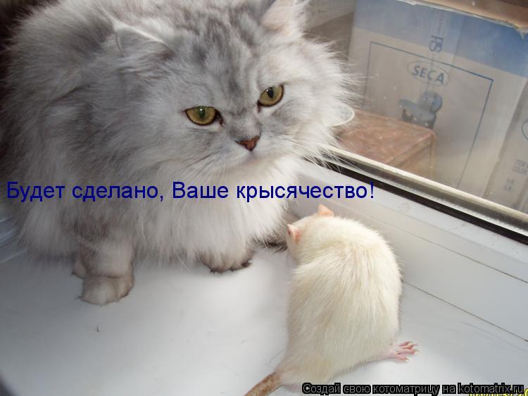 Котоматрица: Будет сделано, Ваше крысячество!
