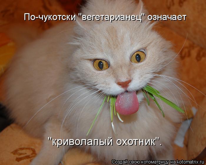"""Котоматрица: По-чукотски """"вегетарианец"""" означает """"криволапый охотник""""."""