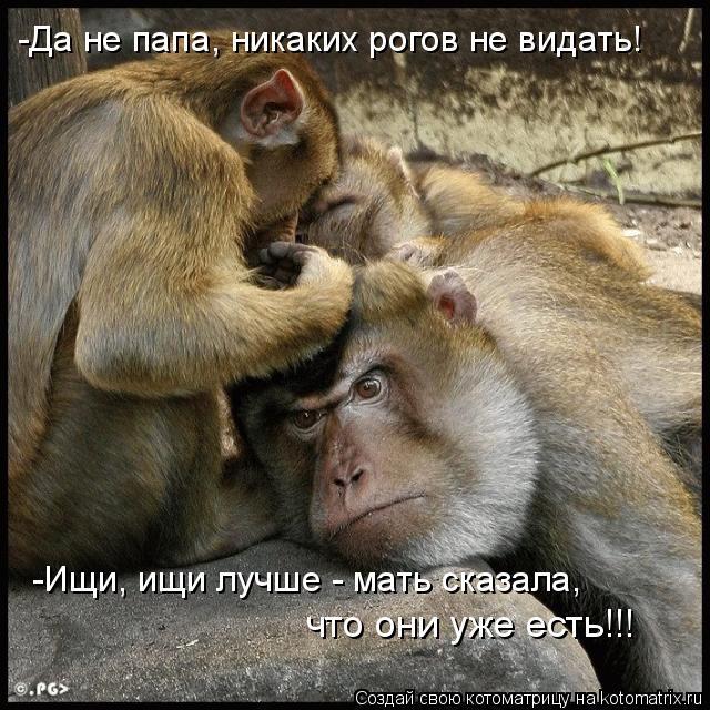 Котоматрица: -Да не папа, никаких рогов не видать! -Ищи, ищи лучше - мать сказала,  что они уже есть!!!