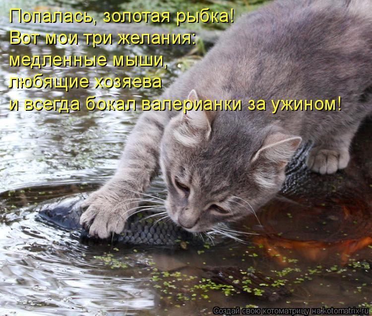 Котоматрица: Попалась, золотая рыбка! Вот мои три желания: медленные мыши,  любящие хозяева и всегда бокал валерианки за ужином!