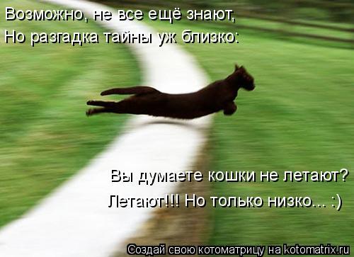Котоматрица: Возможно, не все ещё знают, Вы думаете кошки не летают? Летают!!! Но только низко... :) Но разгадка тайны уж близко: