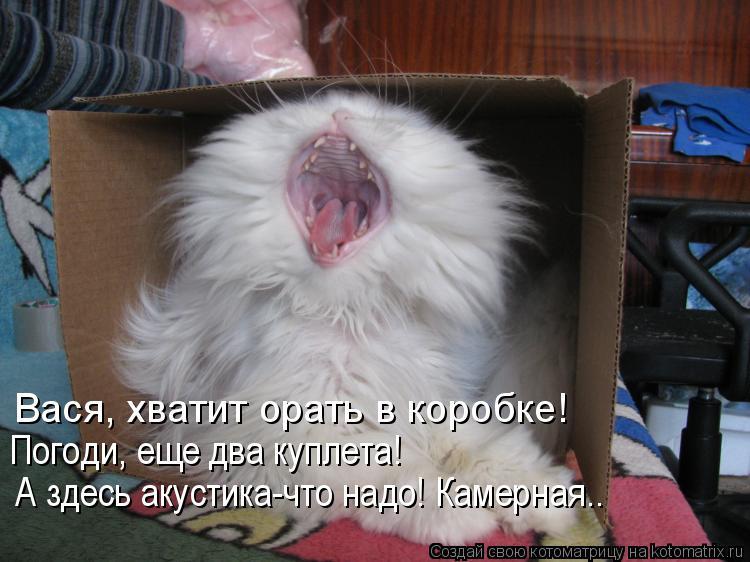 Котоматрица: А здесь акустика-что надо! Камерная.. Вася, хватит орать в коробке! Погоди, еще два куплета!