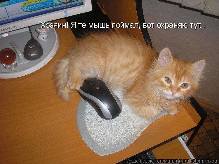 Котоматрица: Хозяин! Я те мышь поймал, вот охраняю тут...
