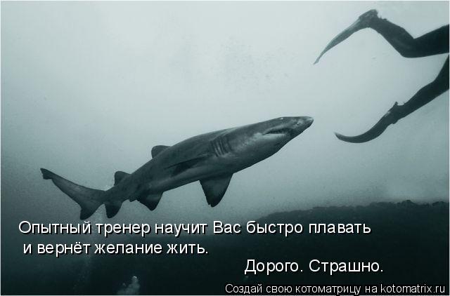Котоматрица: Дорого. Страшно. Опытный тренер научит Вас быстро плавать и вернёт желание жить.
