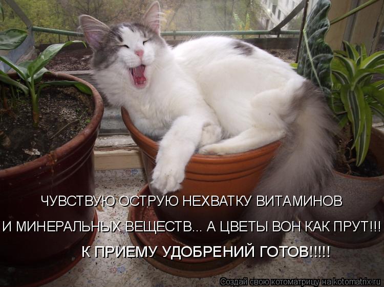Котоматрица: И МИНЕРАЛЬНЫХ ВЕЩЕСТВ... А ЦВЕТЫ ВОН КАК ПРУТ!!! К ПРИЕМУ УДОБРЕНИЙ ГОТОВ!!!!! ЧУВСТВУЮ ОСТРУЮ НЕХВАТКУ ВИТАМИНОВ