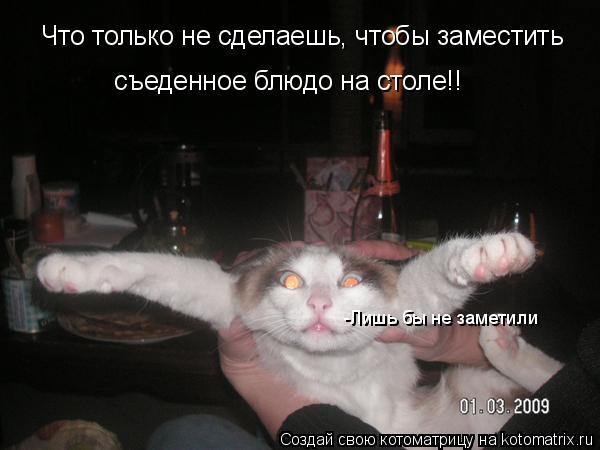 Котоматрица: Что только не сделаешь, чтобы заместить  съеденное блюдо на столе!! -Лишь бы не заметили