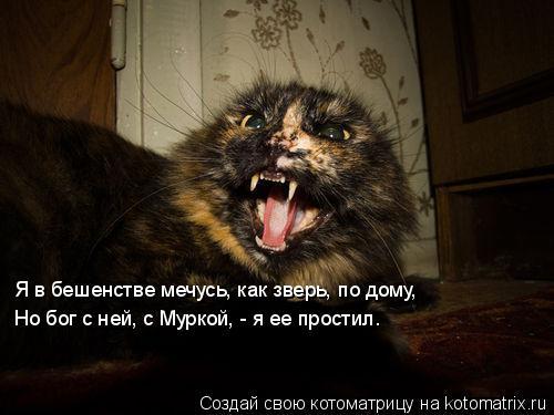 Котоматрица: Я в бешенстве мечусь, как зверь, по дому, Но бог с ней, с Муркой, - я ее простил.