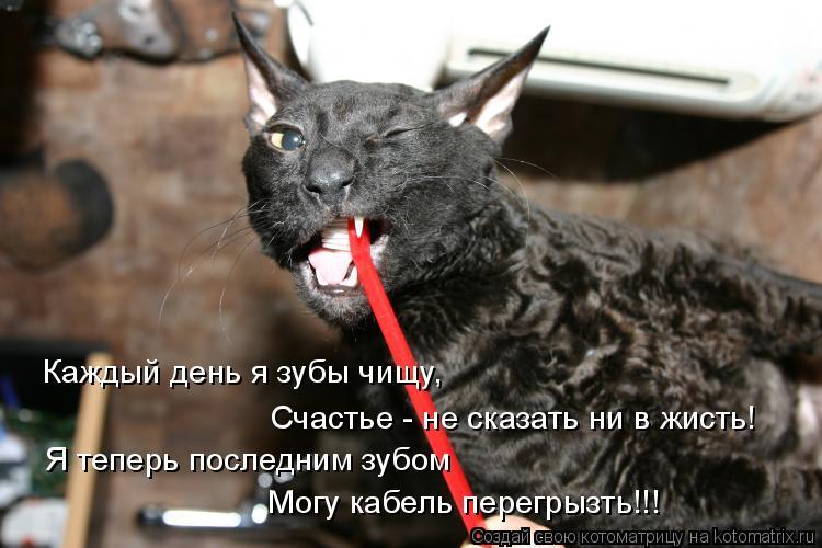 Котоматрица: Каждый день я зубы чищу,  Счастье - не сказать ни в жисть! Я теперь последним зубом  Могу кабель перегрызть!!!