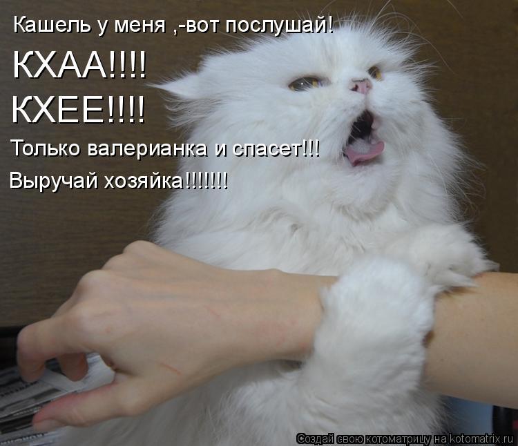 Котоматрица: Кашель у меня ,-вот послушай! КХАА!!!! КХЕЕ!!!! Только валерианка и спасет!!! Выручай хозяйка!!!!!!!