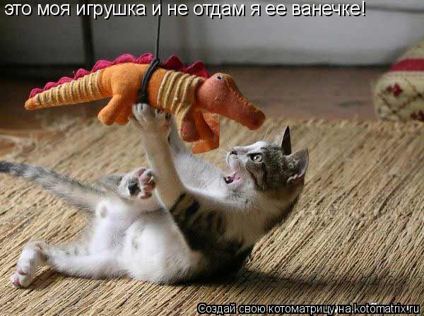Котоматрица: это моя игрушка и не отдам я ее ванечке!