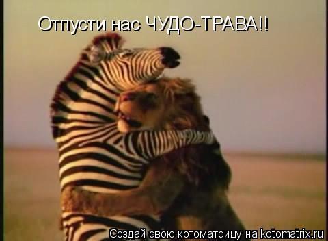 Котоматрица: Отпусти нас ЧУДО-ТРАВА!!