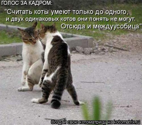 """Котоматрица: ГОЛОС ЗА КАДРОМ:  """"Считать коты умеют только до одного,  и двух одинаковых котов они понять не могут.  Отсюда и междуусобица"""""""