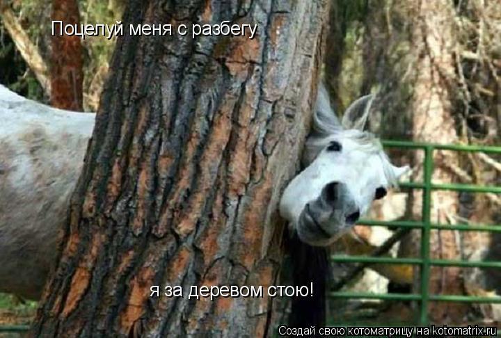 Котоматрица: Поцелуй меня с разбегу я за деревом стою!