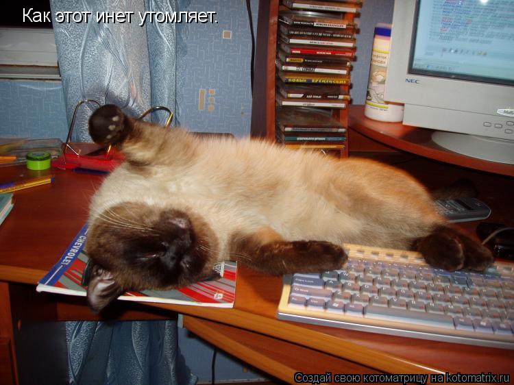 Котоматрица: Как этот инет утомляет.