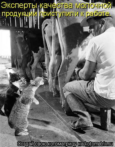 Котоматрица: Эксперты качества молочной  продукции приступили к работе.