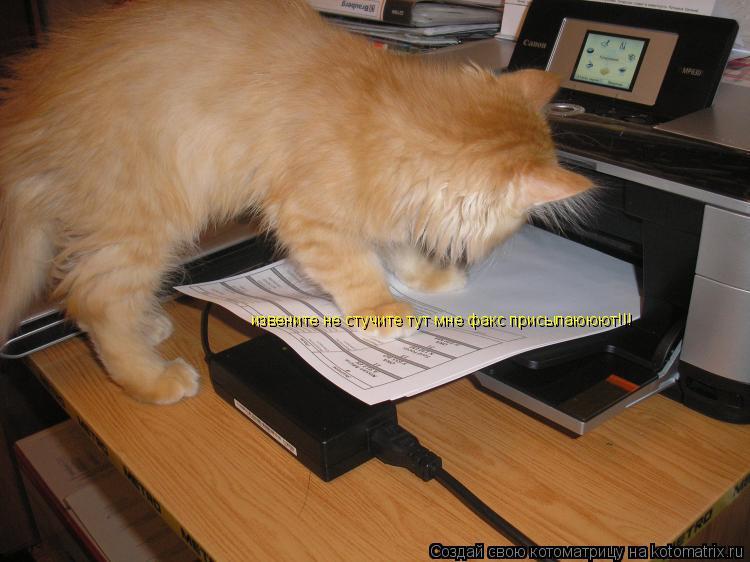 Котоматрица: извените не стучите тут мне факс присылаююют!!!