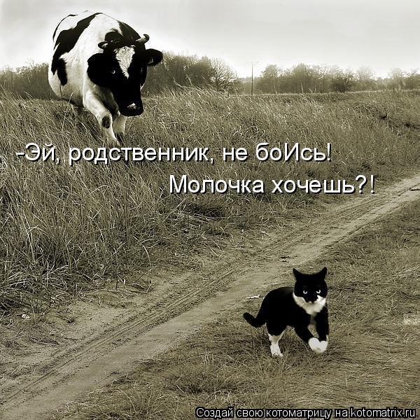 Котоматрица: -Эй, родственник, не боИсь! Молочка хочешь?!