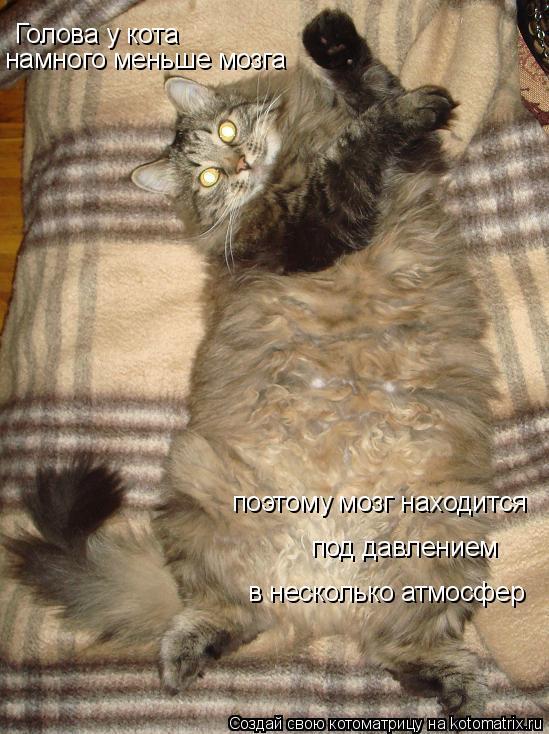 Котоматрица: Голова у кота намного меньше мозга поэтому мозг находится под давлением в несколько атмосфер