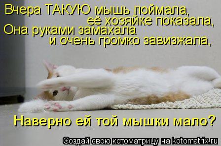 Котоматрица: Вчера ТАКУЮ мышь поймала,  её хозяйке показала, Она руками замахала  и очень громко завизжала, Наверно ей той мышки мало?
