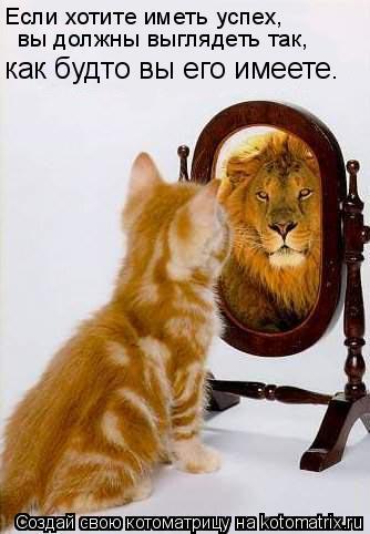Котоматрица: Если хотите иметь успех,  вы должны выглядеть так, как будто вы его имеете.