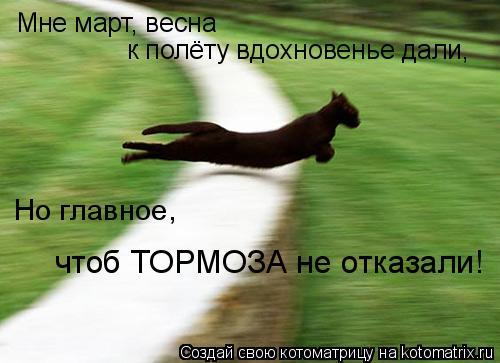 Котоматрица: Мне март, весна  к полёту вдохновенье дали, Но главное,  чтоб ТОРМОЗА не отказали!