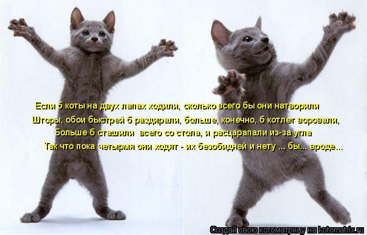 Котоматрица: Если б коты на двух лапах ходили, сколько всего бы они натворили Шторы, обои быстрей б раздирали, больше, конечно, б котлет воровали, Больше б
