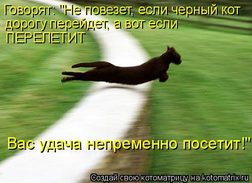 """Котоматрица: Говорят: """"Не повезет, если черный кот дорогу перейдет, а вот если  ПЕРЕЛЕТИТ Вас удача непременно посетит!"""""""
