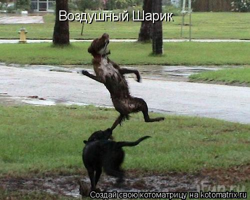 http://kotomatrix.ru/images/lolz/2009/03/17/nN.jpg