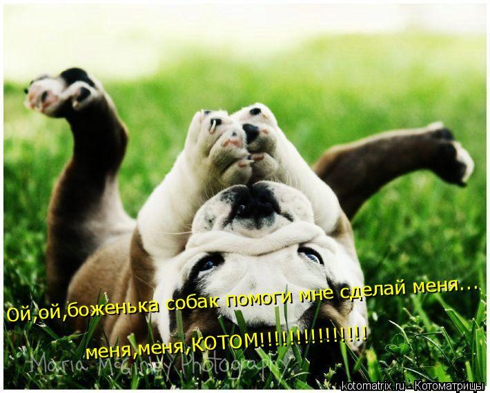 Котоматрица: Ой,ой,боженька собак помоги мне сделай меня... меня,меня,КОТОМ!!!!!!!!!!!!!!!