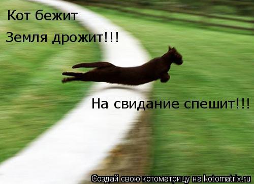 Котоматрица: Кот бежит Земля дрожит!!! На свидание спешит!!!
